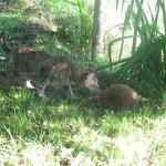 Katze und Igel stören nicht