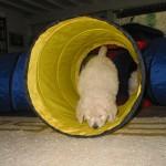 Tunnelspiele im Wohnzimmer