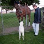 Walters Pferd heißt Indio