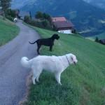 mit Vasco im Berner Oberland