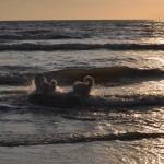 ...das Bad im Meer