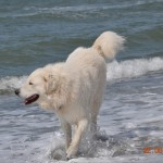 Wellenjagen macht Spaß