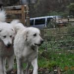 János und Gyöngyi drehen zunächst zwei kleine Runden durch den Garten