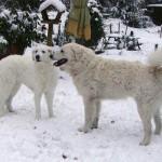 János und Dajka lernen sich kennen