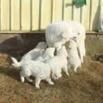 Mama Dajka mit ihren 5 Kindern
