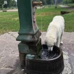 überall gibt es Brunnen