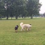 Mailand hat viele hundefreundliche Parks...