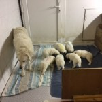Umzug in das große Hundezimmer